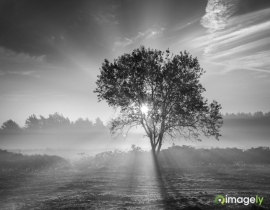 Landscapes_029BW